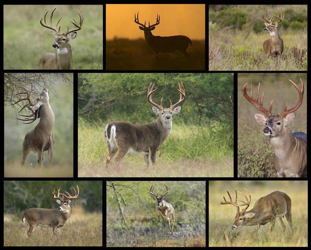 2020 Illinois Deer Rut Maps - Calendar Printable Free  Rut Map For Ga 2021