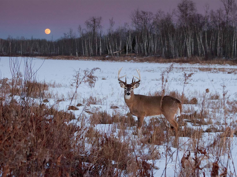 2021 Deer And Deer Hunting Rut Calendar   Calendar  Deer Rut Prediction 2021 For Ny