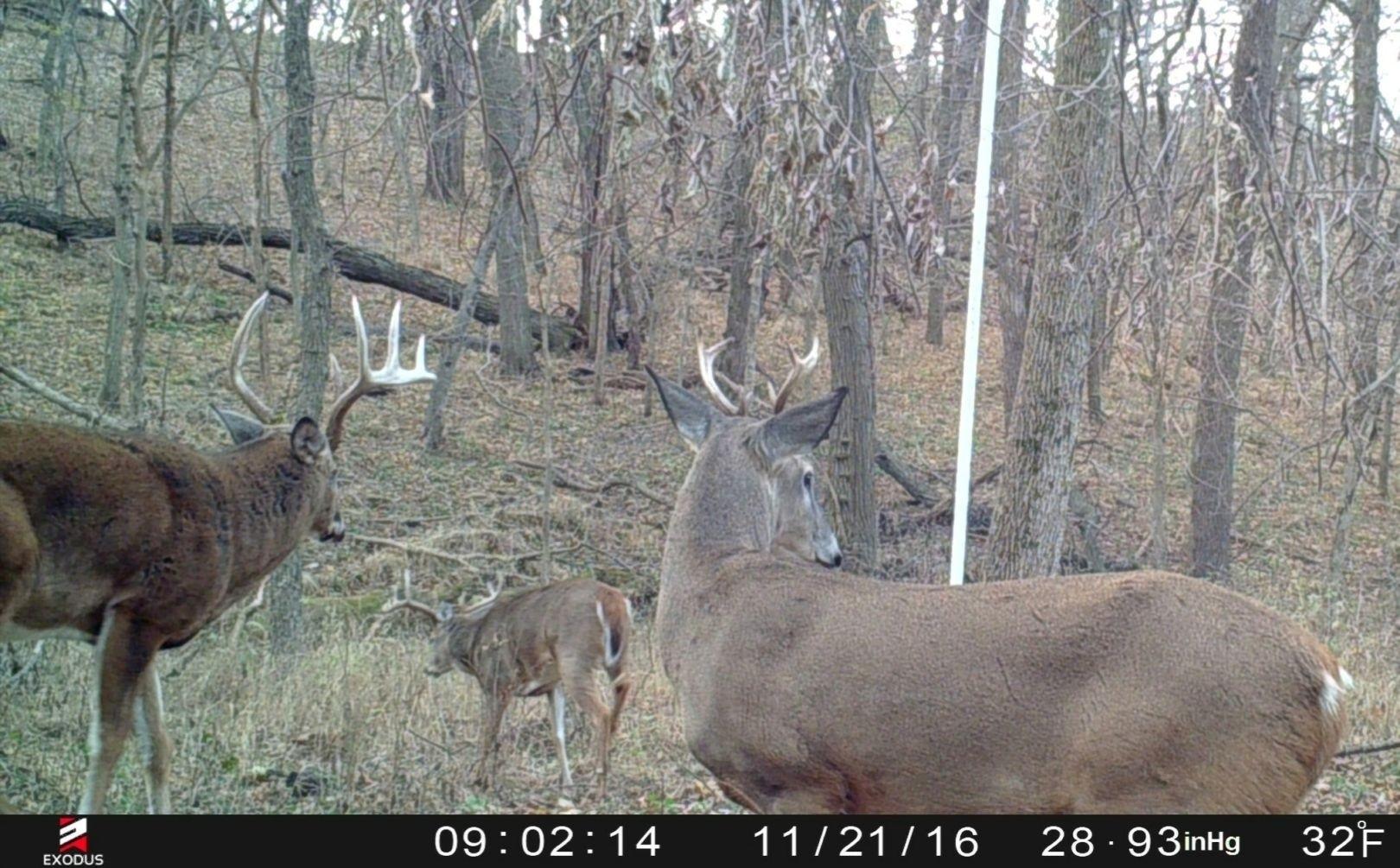 2021 Deer Rut Calendar | Calendar Template Printable  Deer Rut 2021