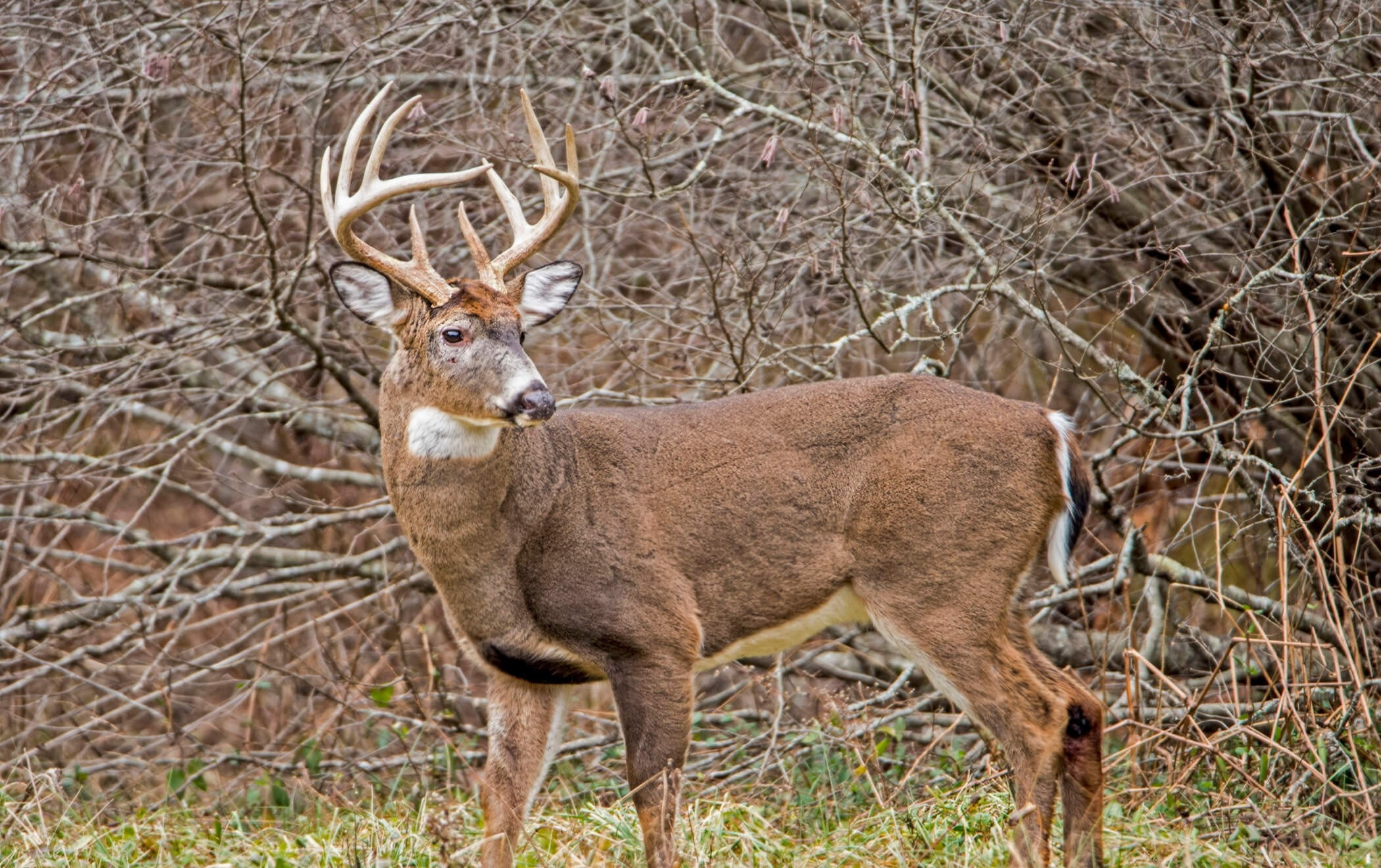 2021 Iowa Whitetail Rut | Calendar Template Printable  2021 Whitetail Deer Rut Predictions