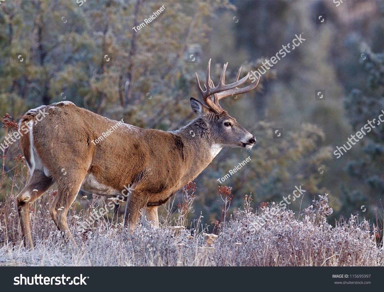 2021 Nys White Tail Rut   Calendar Template Printable  Deer Rut Prediction 2021 For Ny