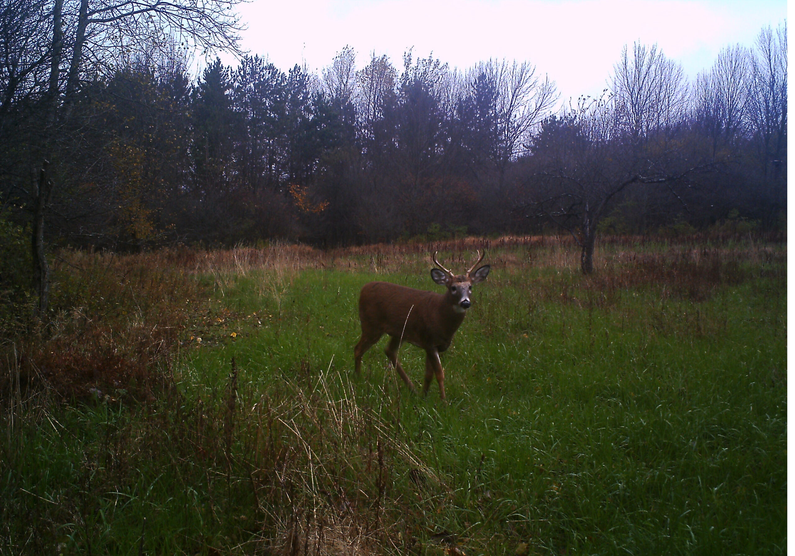 2021 Whitetail Deer Rut Predictions | Calendar Printables  Www.gadeerrut