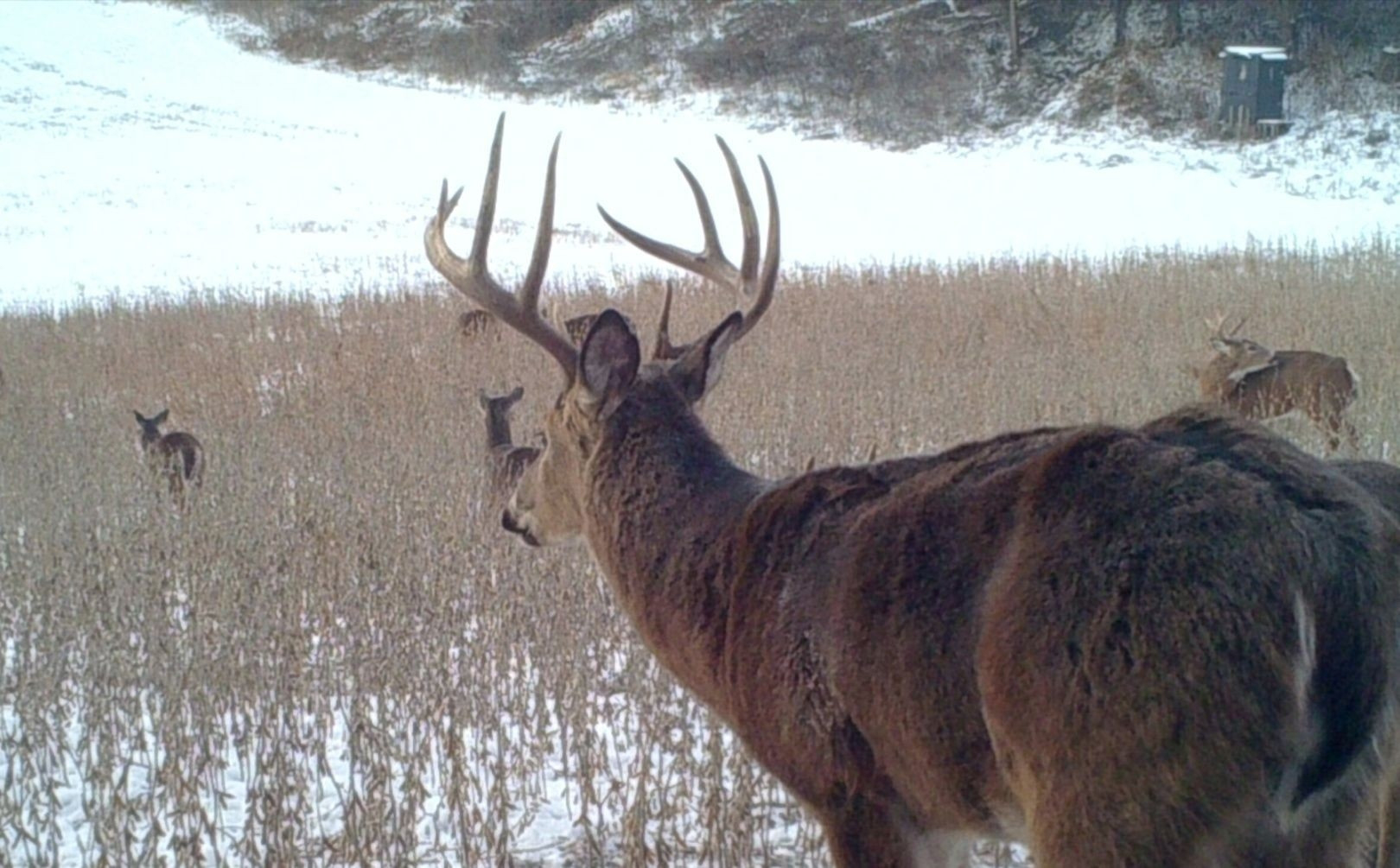 2021 Whitetail Deer Rut Predictions | Calendar Template  2021 Pa Whitetail Rut Predictor