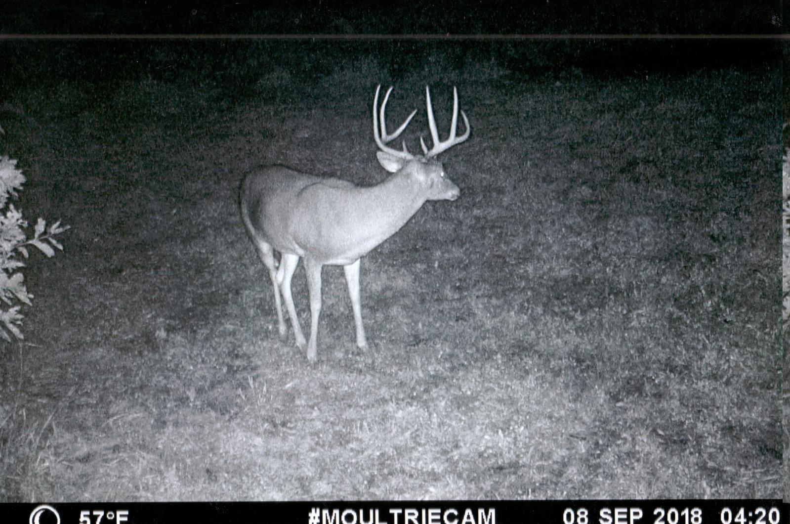 Dates Of Whatetail Rut In Wisconsin 2021   Calendar  2021 Deer Rut In Missouri