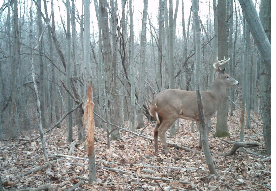 December Rut Tracker Volume One — The Hunting Page  Ny Buck Rut