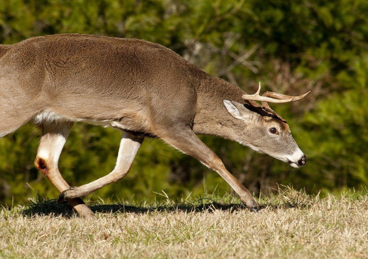 Deer And Deer Hunting Rut Forecast Nys | Calendar Template  Ny Buck Rut