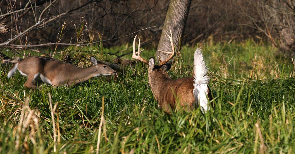 Deer Rut 2021 | Calendar Printables Free Blank  Deer Rut Prediter 2021