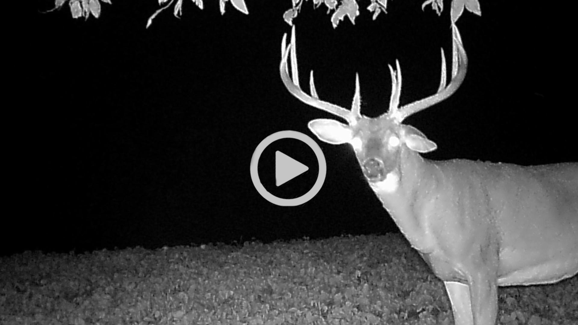 Deer Rut In Indiana 2021   Calendar Printables Free Blank  Indiana Deer Rut Start Date