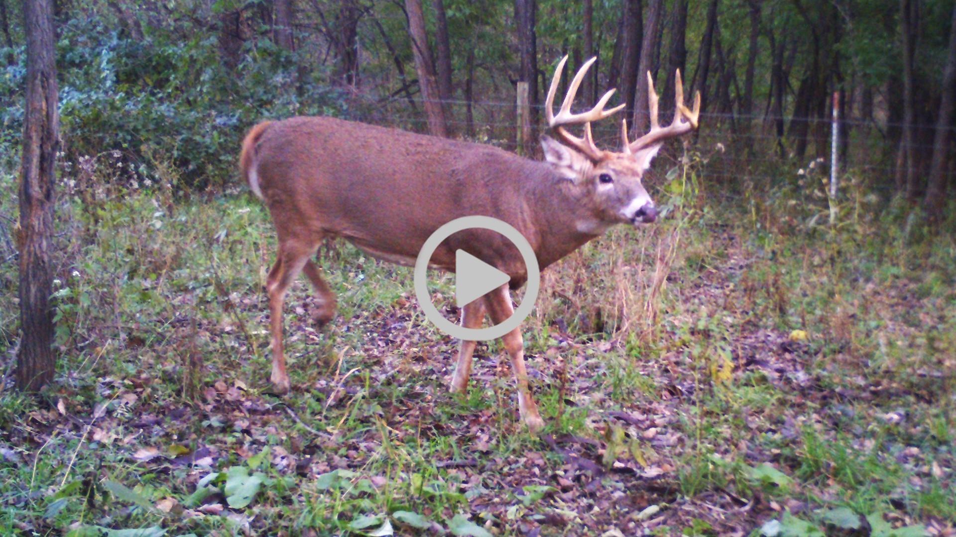 Deer Rut Predicted Dates For 2021 | Calendar Template  2021 Deer Rut Calendar