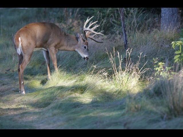 Deer Rut Predictions For Wi 2021 | Calendar Template Printable  2021 Whitetail Deer Rut Predictions