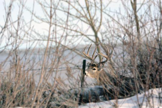 Late-Date Deer   Successful Hunter  Indiana Deer Rut Start Date
