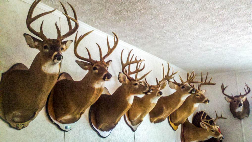Late Season Turkey Hunting In Georgia - Grand Slam Network  Deer Hunting Season In Georgia
