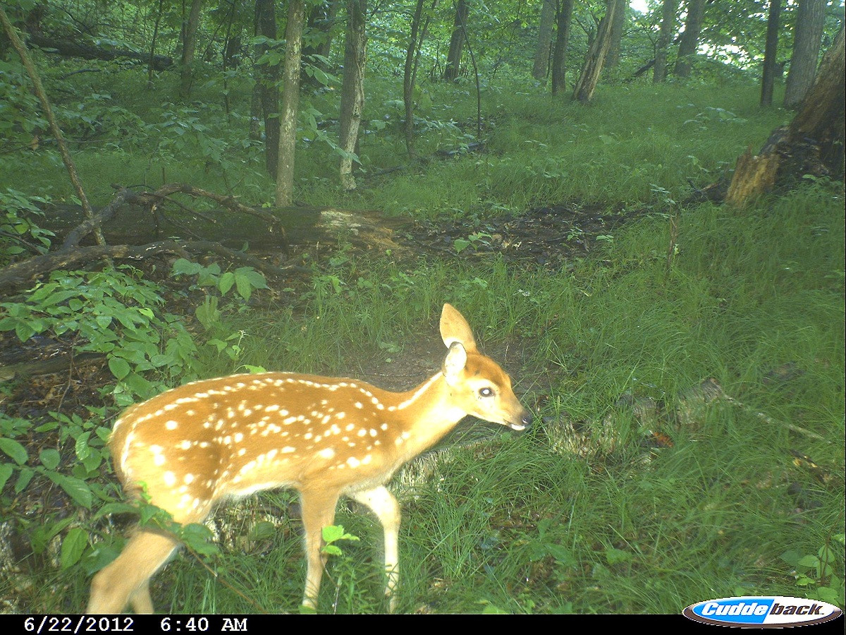 May And The Timing Of The Whitetail Rut | Outdoorhub  The Lunar Rut Theory