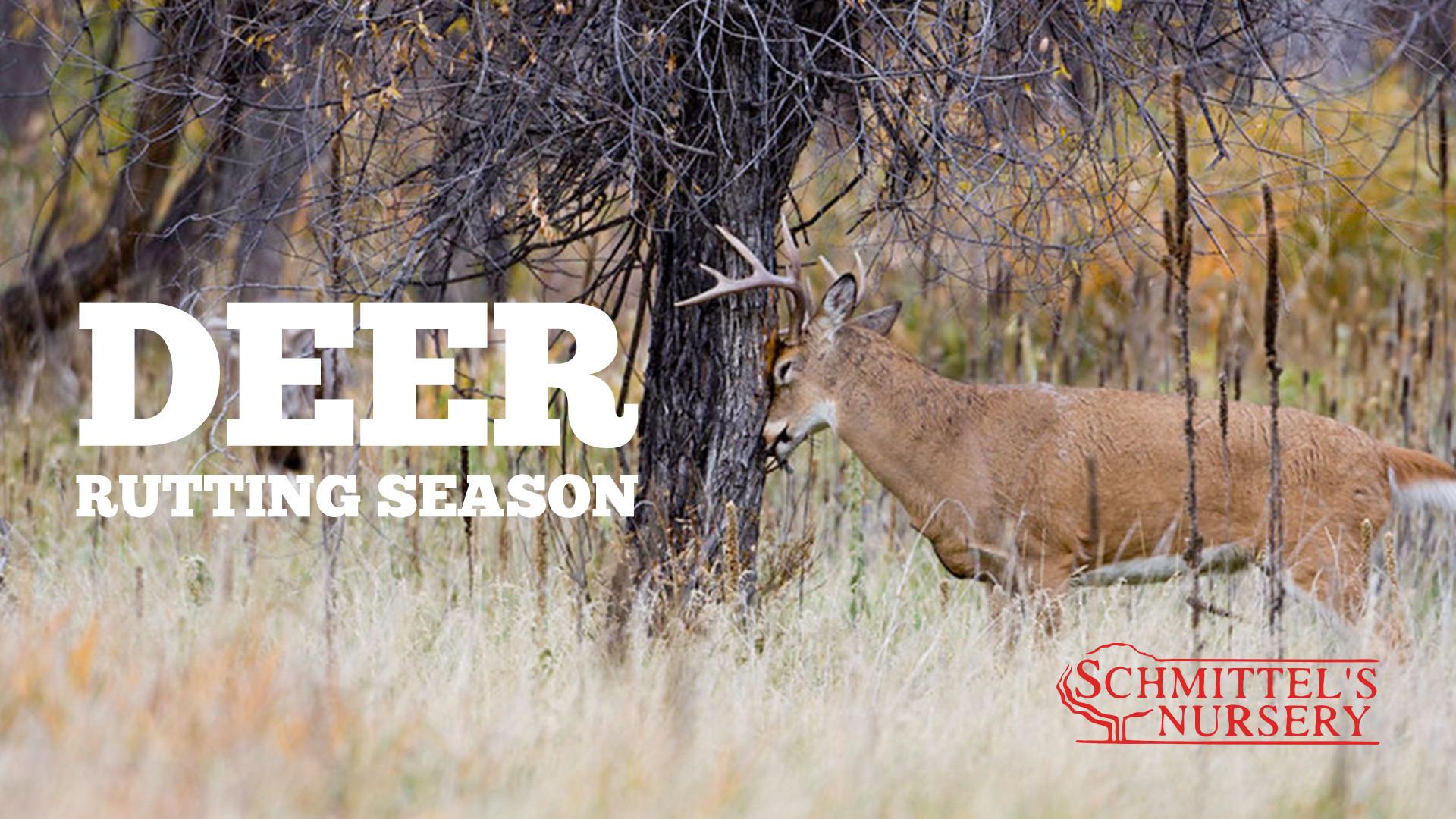 Md Deer Rut 2021   Calendar Printables Free Blank  Peak Rut Wisconsin 2021