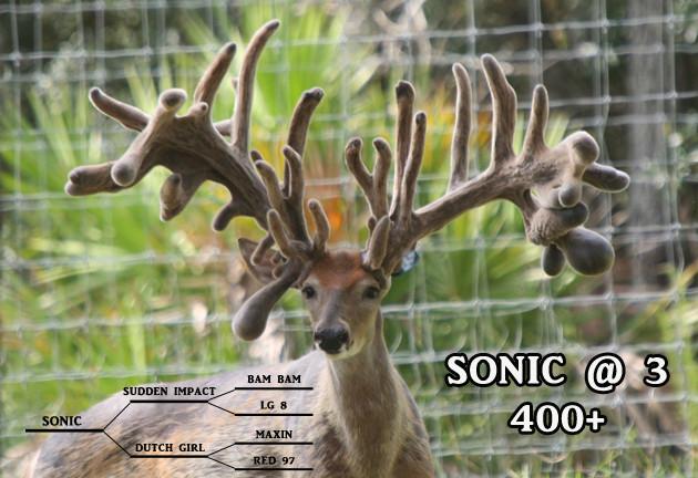 Northeast Florida Deer Rut Dates | Calendar Printables  Rut Predictions North East Photoperiod