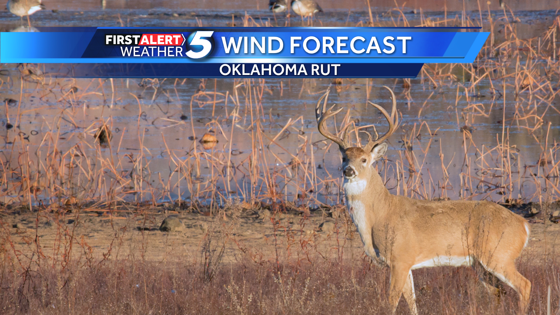 Oklahoma Whitetail Deer Rut Wind Forecast - Oklahoma City  Deer Rut In Ny