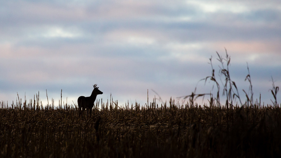 Outdoornews: Hunting, Fishing Mn, Wi, Il, Mi, Pa, Oh, Ny  Nys 2021 Deer Forecast