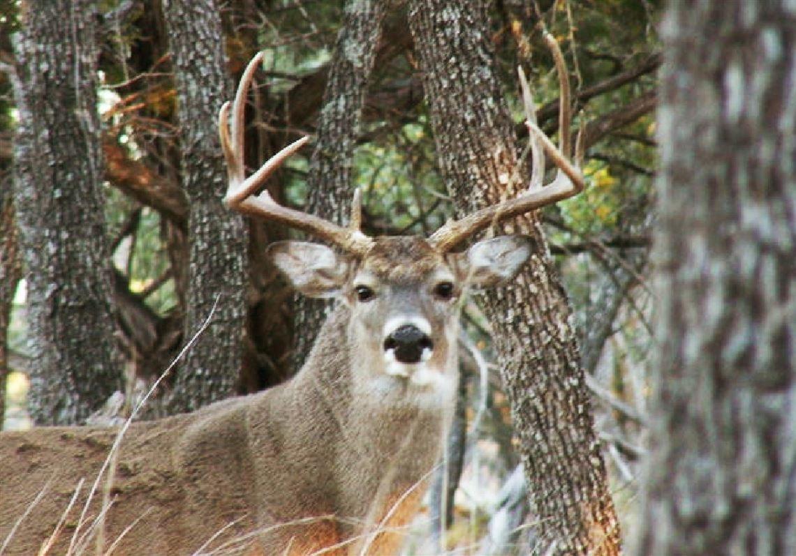 Pa Rut Report 2021 | Free Calendar Template Example  Pa Deer Rut