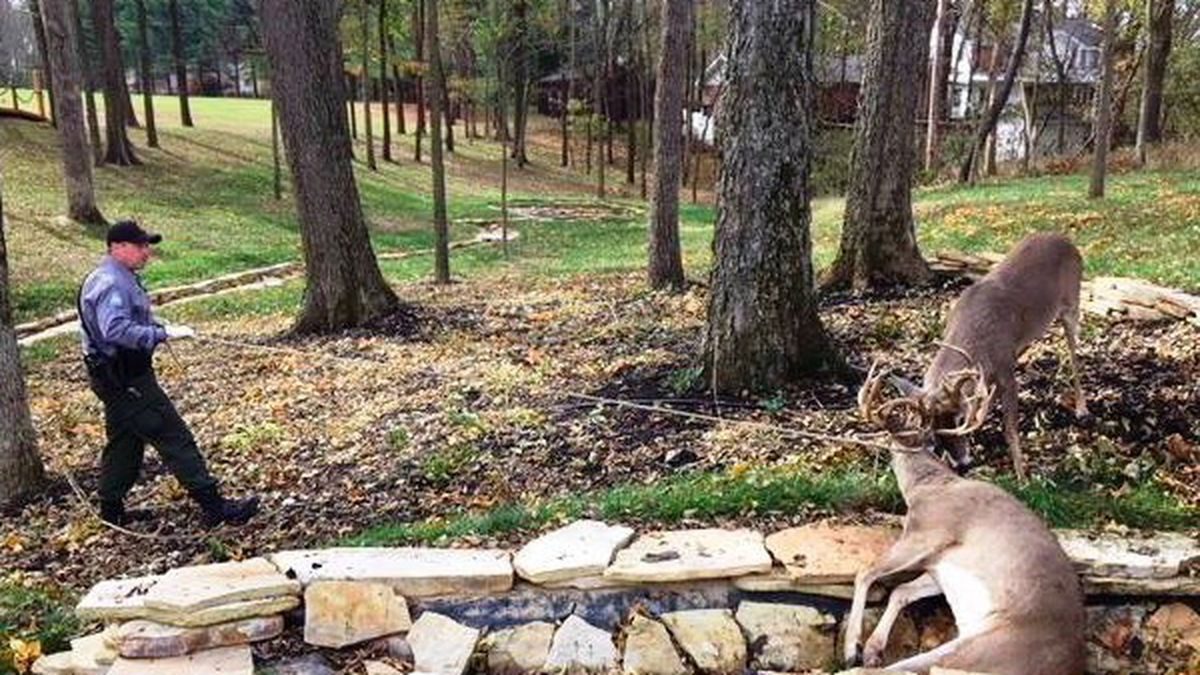 Pictures: Conservation Agents Free 2 Bucks With A Saw  Missouri Rut Map