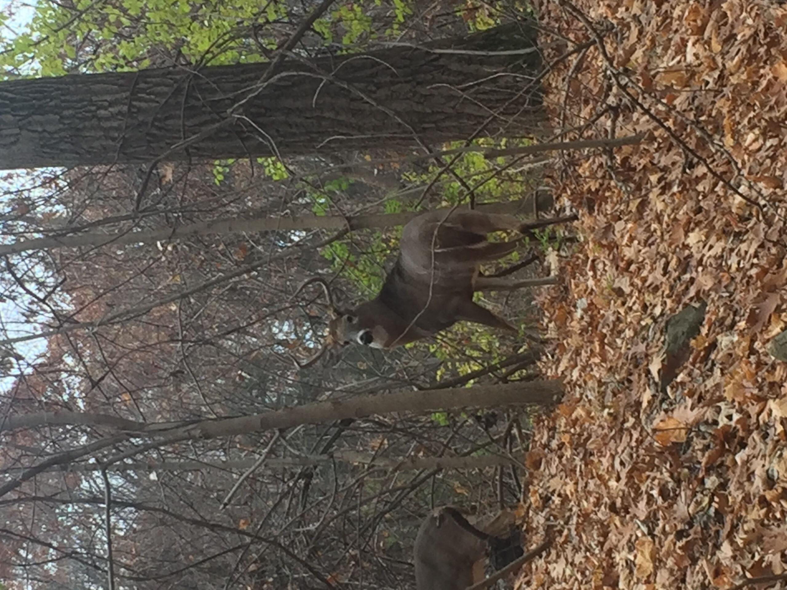 Rut Status Southern Zone - Page 4 - Deer Hunting - Hunting  Deer Rut In Ny