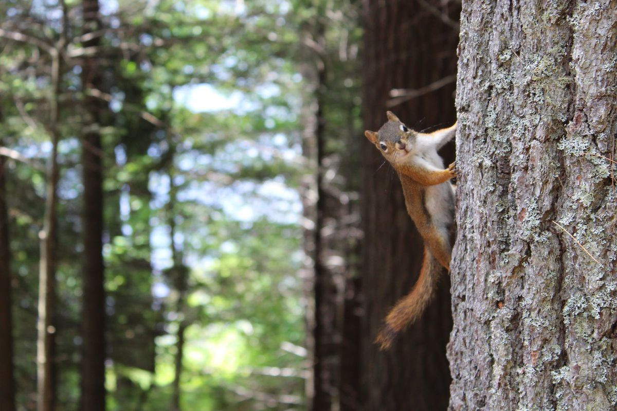 Squirrel Hunting Season Opening August 15 Across Georgia  Deer Hunting Season In Georgia