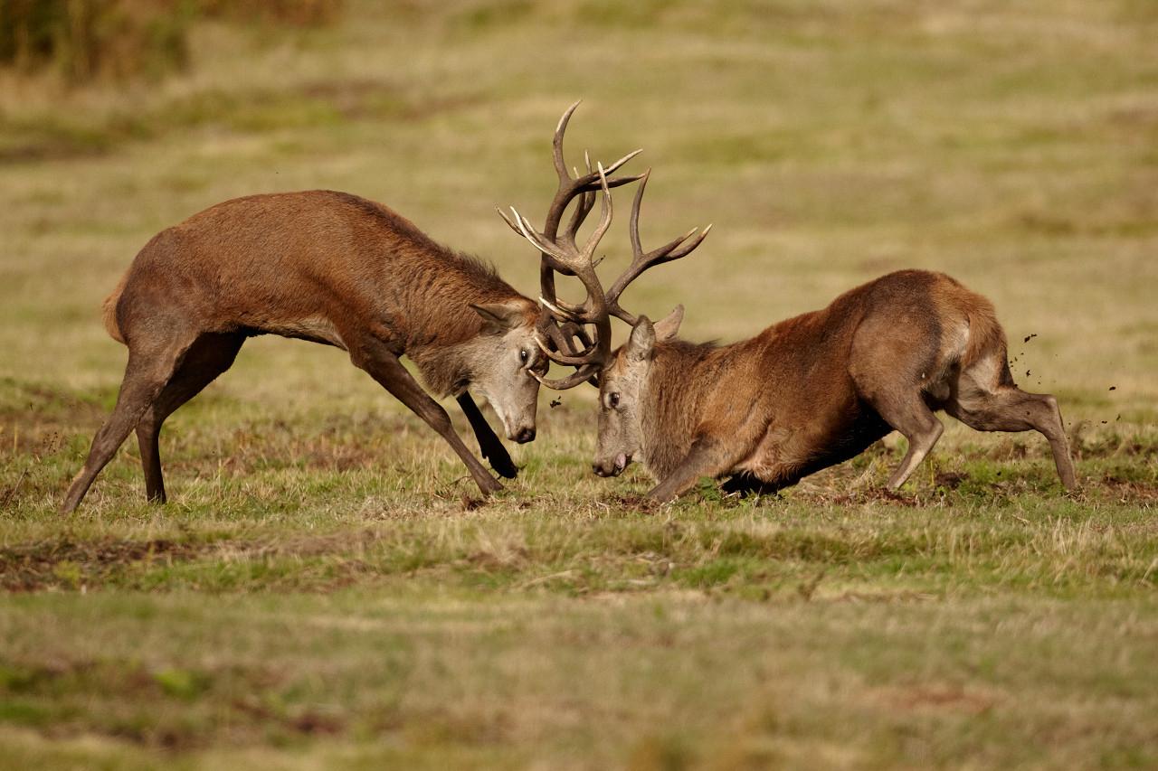 The Deer Rut For Ga 2021 | Calendar Printables Free Blank  South Georgia Rut