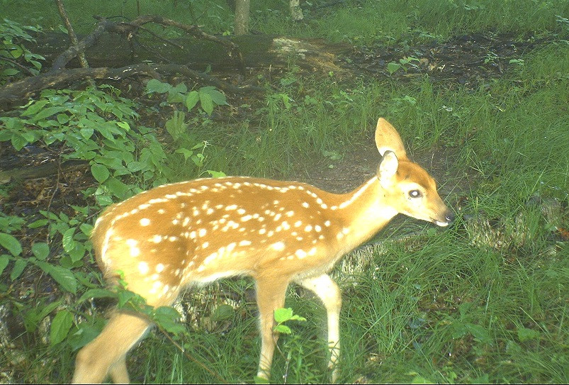 The Months Of May And June; The Timing Of The Whitetail  The Lunar Rut Theory