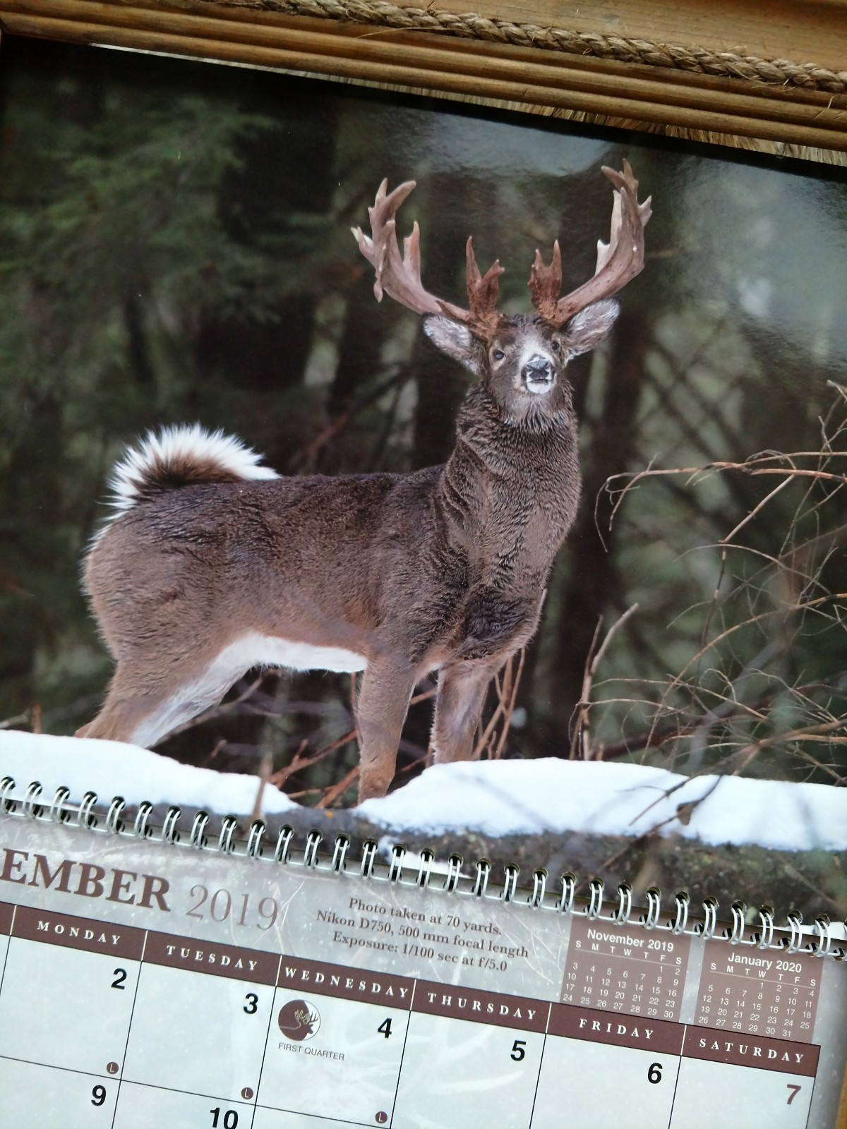 What Is The Whitetail Rut Prediction For 2021 | Calendar  2021 California Deer Rut Presictions
