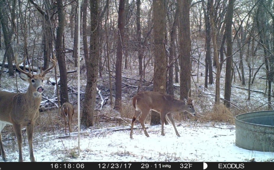 What Is The Whitetail Rut Prediction For 2021 | Calendar  2021 Deer Rut Wisconsin Prediction