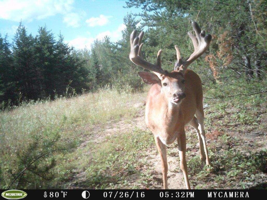 When Is The 2021 Deer Rut In Wi | Calendar Printables Free  Deer Rut Prediter 2021