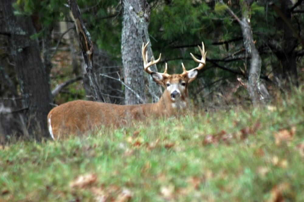 When Is The 2021 Deer Rut In Wi | Calendar Template Printable  Wisconsin Whitetail Rut Map For 2021