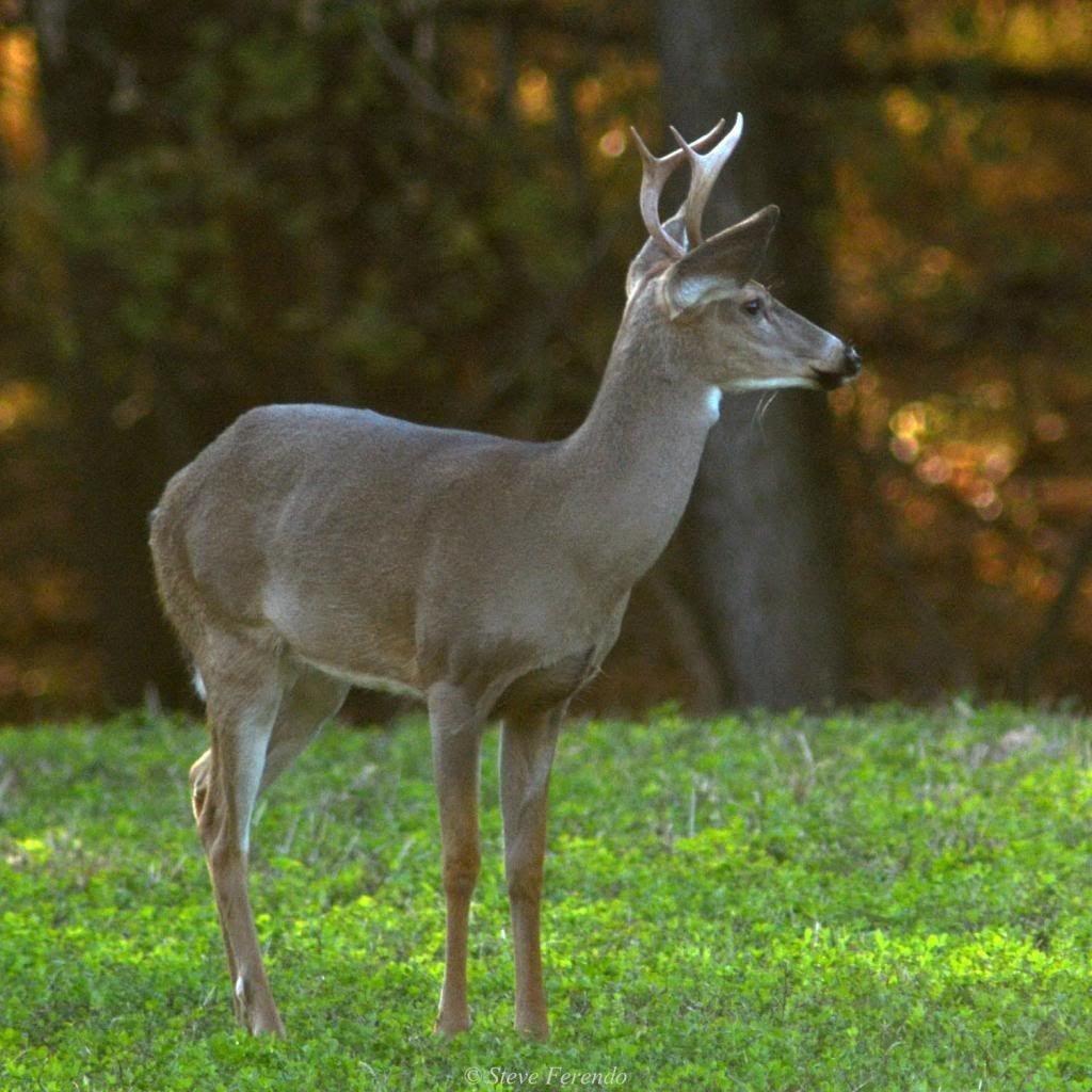 Whitetail Deer Rut In Md | Calendar Template Printable  Pa Deer Rut