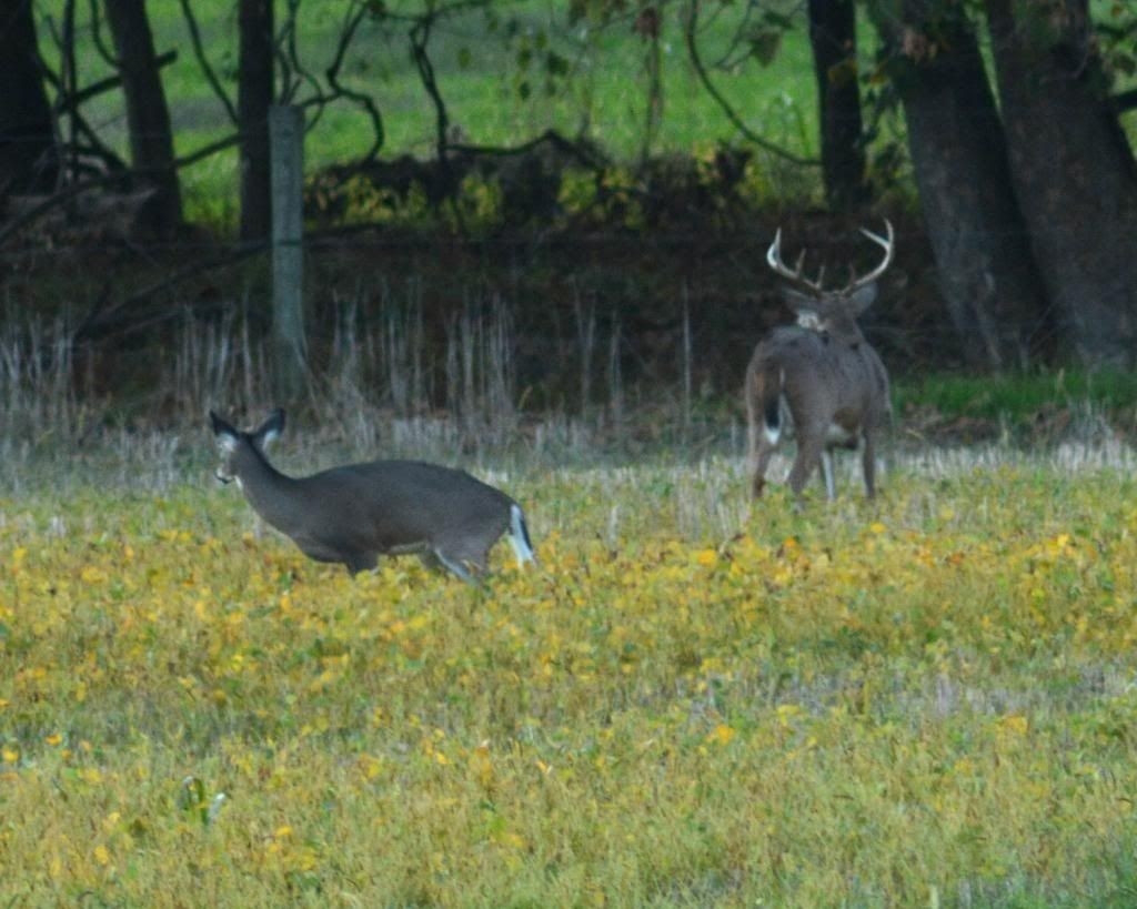 Whitetail Deer Rut In Md   Calendar Template Printable  Pa Whitetail Deer Rut
