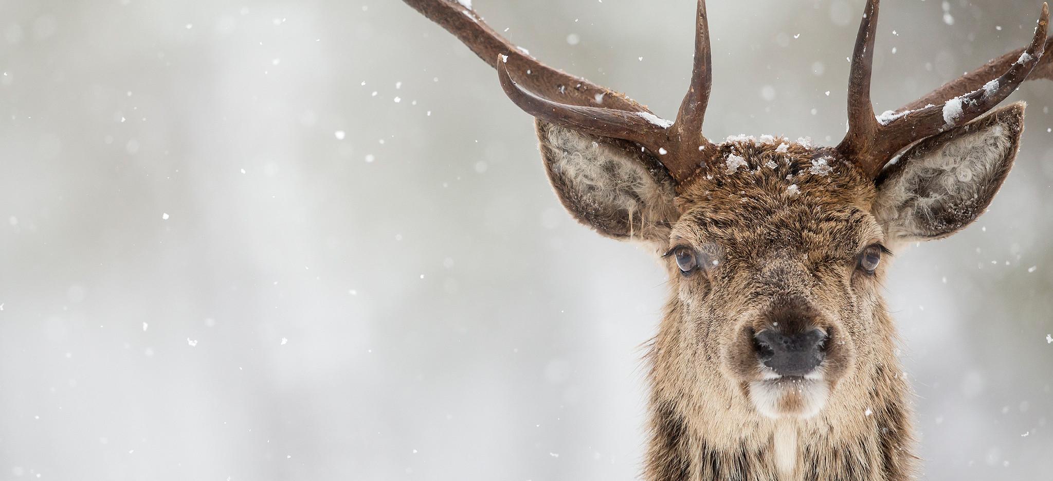 Whitetail Rut 2021   Calendar Printables Free Blank  2021 Deer Rut In Missouri