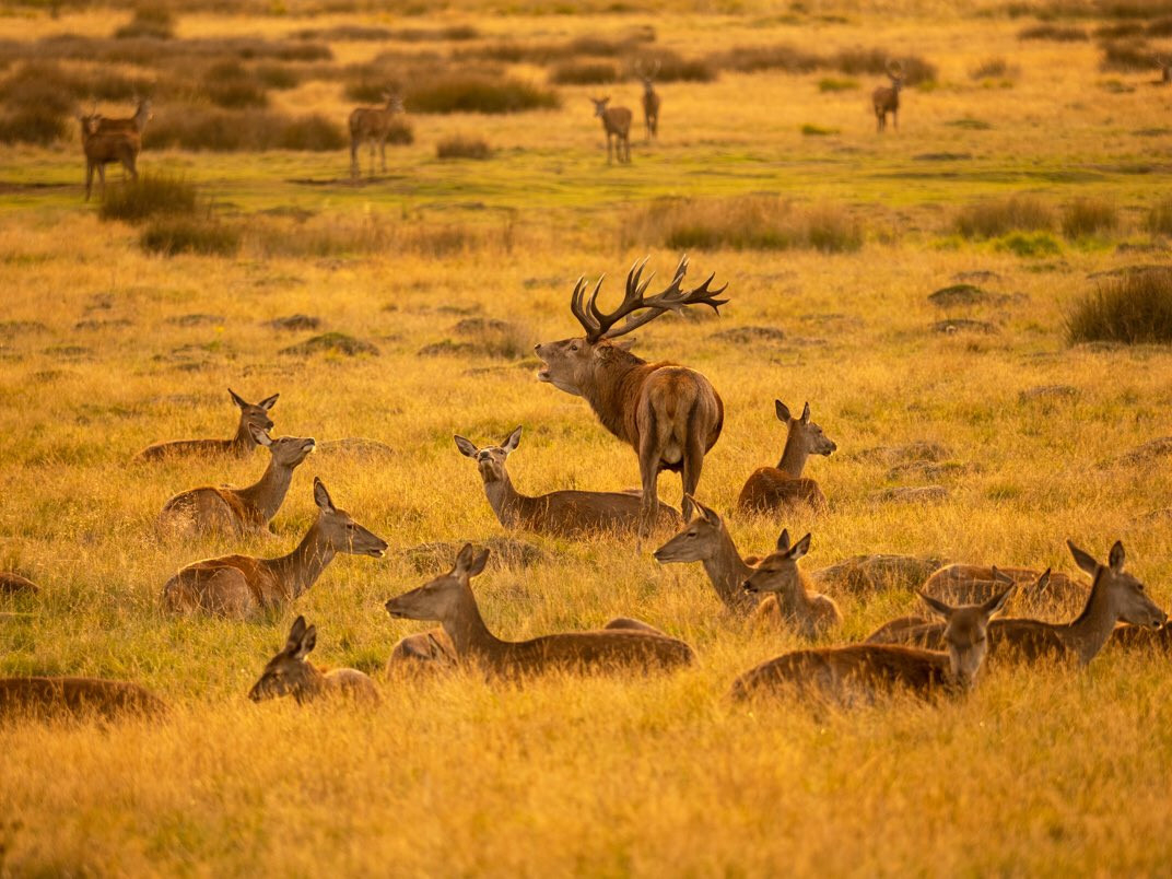 12 Things You Should Know About The Deer Rutting Season  What Are The Peak Times For The Pa Rut Season
