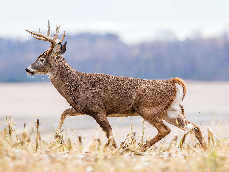 2021 Deer And Deer Hunting Rut Calendar - Template  When Is The Rut In Nj