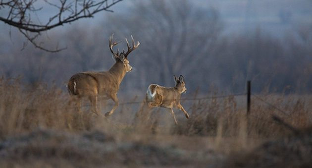 2021 Deer Hunting Rut Forecast   Calendar Printables Free  Louisiana Deer Rut Times