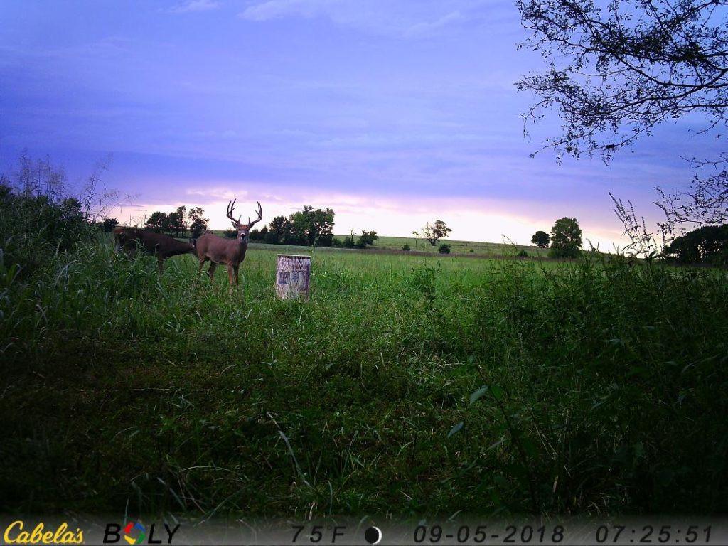 Kansas Whitetail Deer Hunt - Book Now For 2021 - B & C  2021 Kansas Deer Hunting Outlook