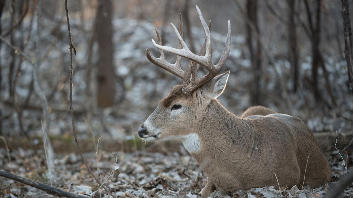 Mississippi Deer Rut Report  Louisiana Deer Rut Times