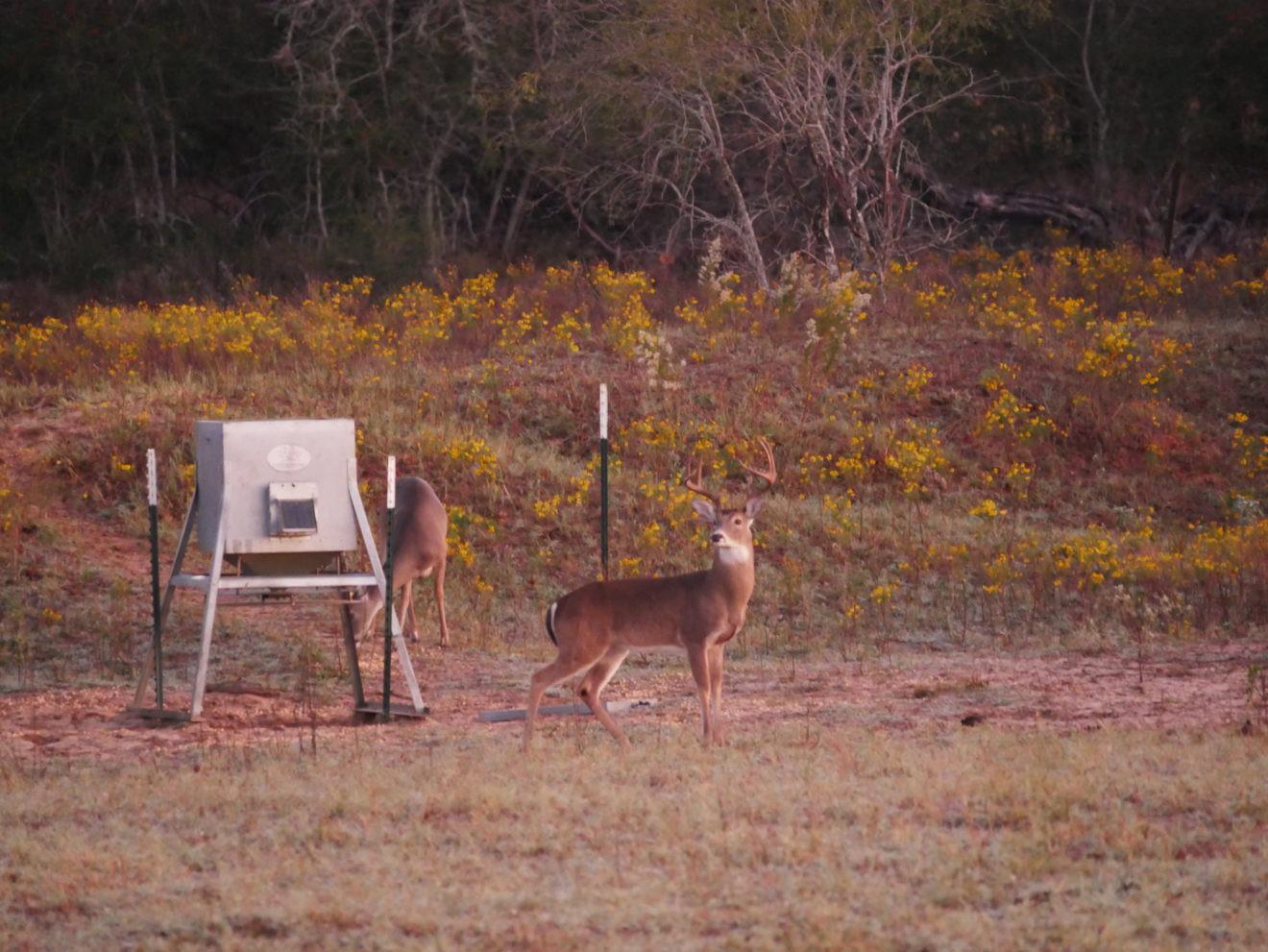 Peak Deer Rut 2021   Calendar Printables Free Blank With  Deer Rut Calendar 2021