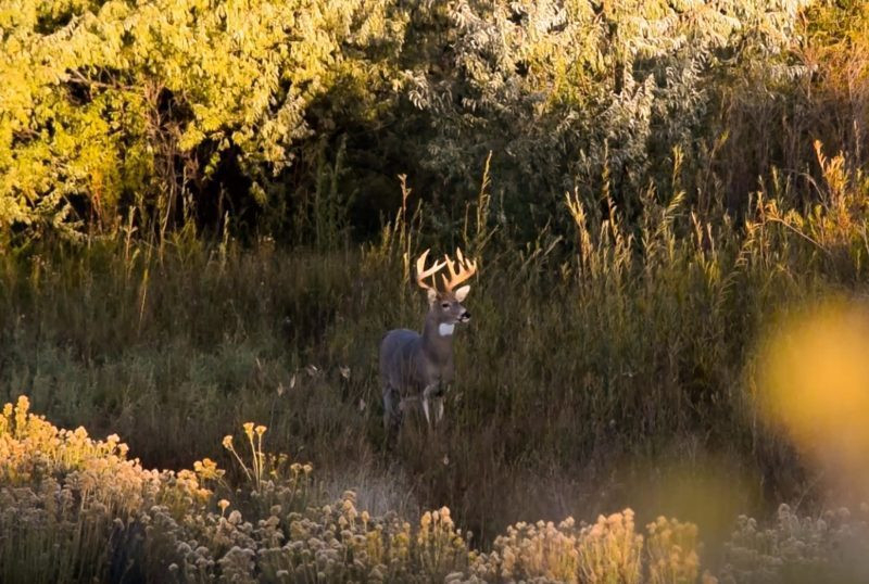 What Do You Know About The Whitetail Rut | Ehuntr  Ny Deer Rut