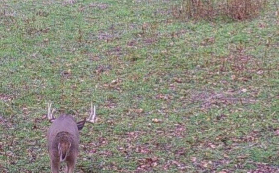White Tail Deer Rutt Nc 2021 | Calendar Printables Free Blank  When Will The Rutt Start In Ga