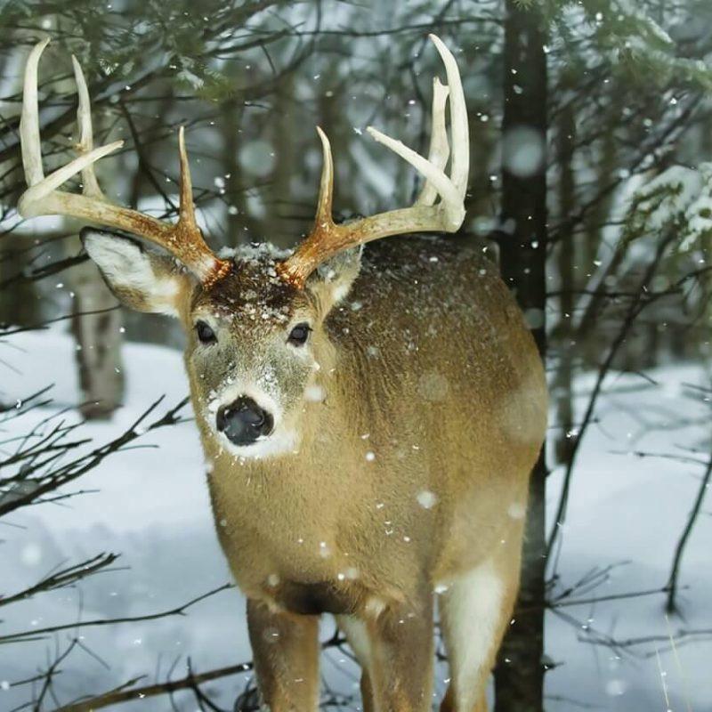 Whitetail Deer Rut In Indiana | Calendar Printables Free  Indiana Rut2021